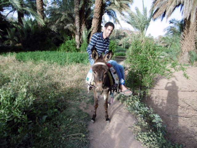 donkeyrides